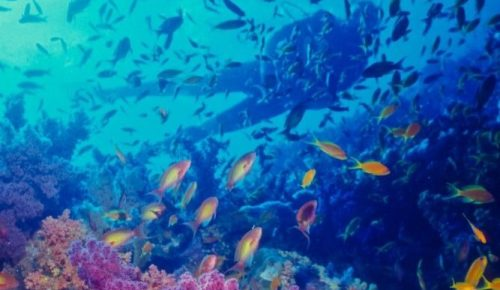 Zaki's reef, Egypt